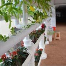 季刚播绿未来十年中国有机农业发展的关键有用吗?好处是什么?图片