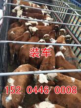 可靠的吉林養牛場在哪里圖片