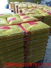 玉溪高流动度双快水泥生产厂家152-878-32719图片