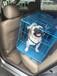 香港寵物托運至國內國際寵物運輸寵物空運入境免隔離!