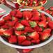 新品种红珍珠草莓苗基地、红珍珠草莓苗批发价格多少钱
