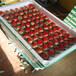 哪里有桃熏草莓苗、桃熏草莓苗多少钱一棵