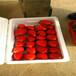 新品种女峰草莓苗基地、女峰草莓苗多少钱一棵