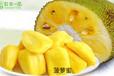 菠蘿蜜哪里可以種植