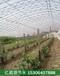 通遼市葡萄大棚滴灌帶用途及型號