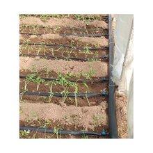 周口塑料大棚蔬菜水肥一体化技术方案