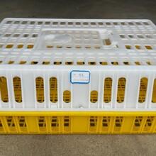 廣西塑料箱塑料地臺板藍色周轉箱運輸箱圖片