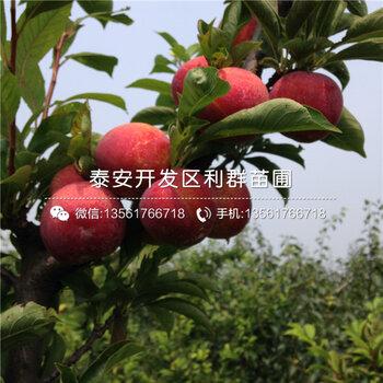 乐山黄页88网