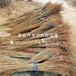 山东4公分香椿树苗报价、山东4公分香椿树苗价格是多少