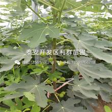 矮化1公分大樱桃树苗出售价格多少图片