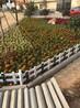 武漢花壇護欄生產廠家,pvc草坪護欄圖片