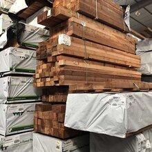 红雪松最新价格上海红雪松厂家