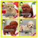 广东大型养狗基地泰迪熊,广州泰迪熊,佛山泰迪熊