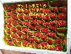 郑州市大赛草莓苗批发