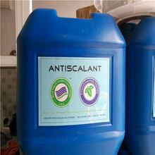 兴安盟厂家供应进口蓝旗清洗剂BF-301去除RO膜水垢图片