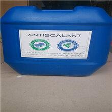 河南廠家直銷反滲透膜清洗劑BF-301藍旗清洗劑廠家促銷中圖片