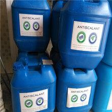 销售RO膜专用蓝旗清洗剂BF-301联系人张图片