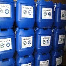 呼倫貝爾廠家直銷BF-301反滲透膜清洗劑-藍旗清洗劑圖片