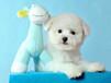 广州哪里买狗的人比较多广州应该去哪里买狗好广州买比熊
