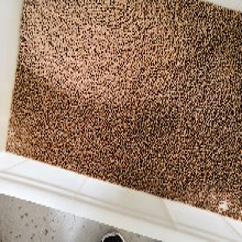中華草龜巴西龜花龜上浮高蛋白龜糧食物飼料加工生產線圖片