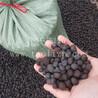 陶粒混凝土天津回填建筑陶粒天津陶粒价格