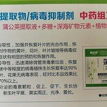供应西葫芦褪绿病毒病得海龙蒲公英大青叶病毒抑制剂60g袋装