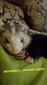 青岛安格鲁安哥鲁宠物貂出售的地方找小默默图片