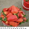 京郊小白草莓苗今年报价,京郊小白草莓苗口感好产量高,京郊小白草莓苗品种展示