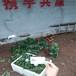 甘露草莓苗哪里供應、甘露草莓苗包郵正品