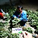 香野草莓苗湖南今年报价