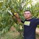 純正便宜的中油24桃樹苗、供應價格