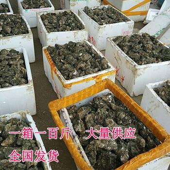 湛江鲜活新鲜烧烤生蚝海蛎子牡蛎海鲜货源批发产地直销