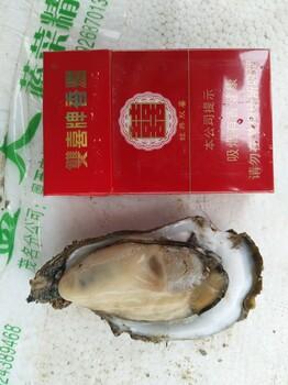 湛江鲜活新鲜烧烤生蚝海蛎子牡蛎海鲜货源批发产地直销现捞现发全国发货
