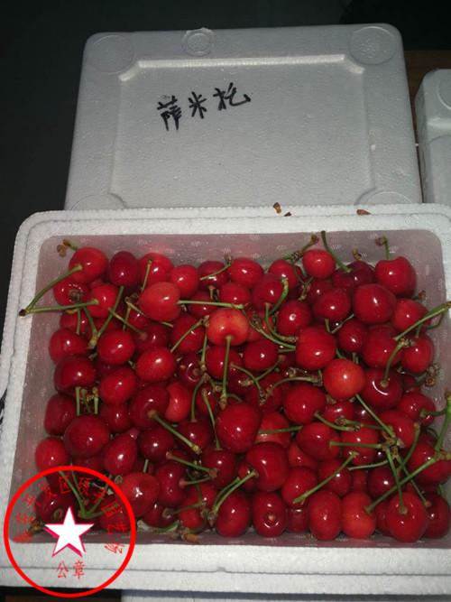 一年生早红宝石樱桃苗价格、一年生早红宝石樱桃苗零售价格