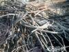 安陽今廢舊電纜回收價格安陽廢電纜回收廢電線電纜回收行情報價