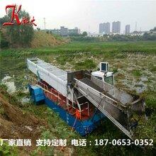 科大厂家供应KD-100大型全自动芦苇收割船收集运输设备