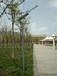 滁州鳳陽縣7米太陽能路燈價格行情