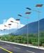 雙柏縣農村路燈6米5米哪里買