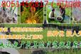 欢迎)衢州小龙虾种苗成/多少钱一斤