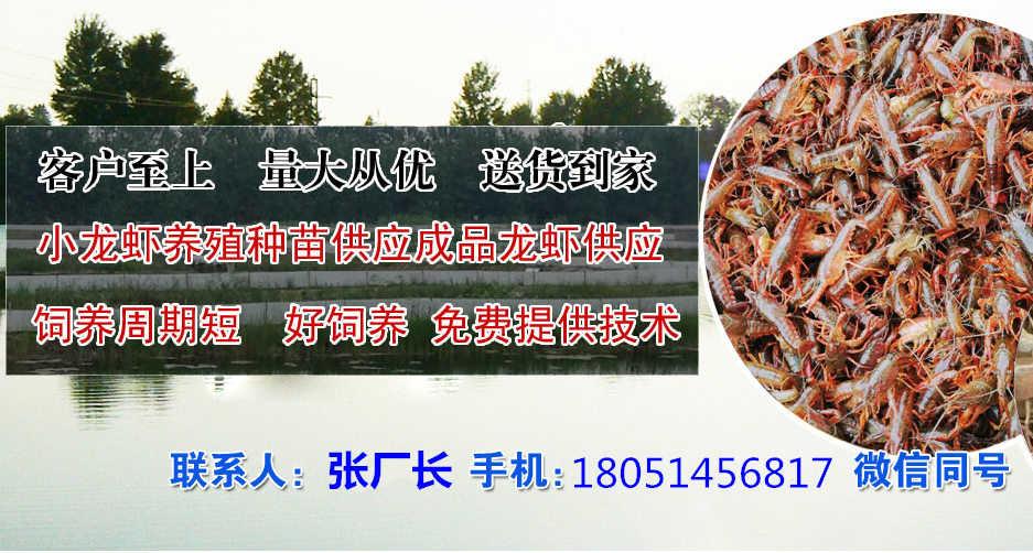 新闻:临潼小龙虾种苗厂家地址√欢迎您