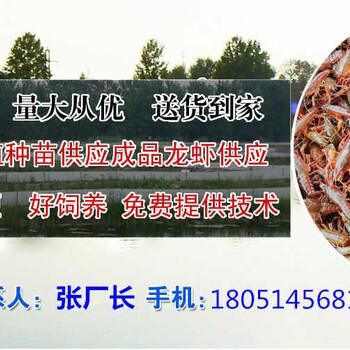 岱山县淡水龙虾种苗价格