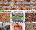 新闻:常熟市小龙虾种苗厂家地址√欢迎您