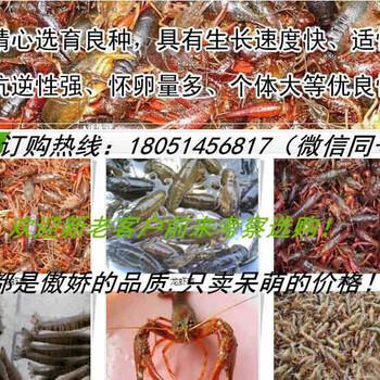 雅安市小龙虾苗养殖专业合作
