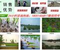 新闻:吴江市小龙虾种苗厂家地址√欢迎您