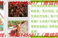 蘄春縣龍蝦種苗批發市場與進貨渠道