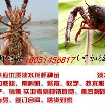 德保县小龙虾苗养殖专业合作