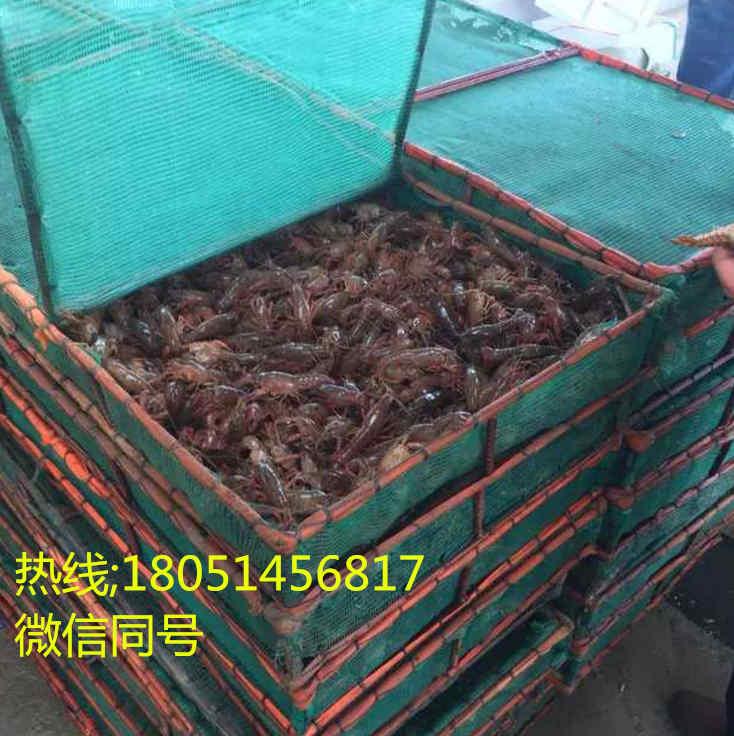 湖南岳阳抱卵种虾价格/淡水虾苗