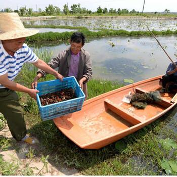 醴陵龙虾苗多少钱一斤(龙虾养殖)