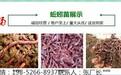 咸宁蚯蚓苗每斤多少钱/量大从优