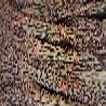 泰山红甜石榴苗成活率高